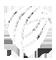 logo-branco-araujo-cruz-corretora-seguros-1